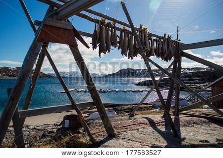 View to to arctic sea fishing village through cod drying racks