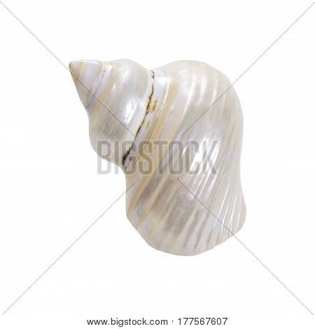 Pearl nautilus shell section on white background. Sea shell