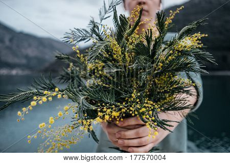 Bouquet Of Mimosa In Woman Hands With Yellow Mimosa Near Sea In Evening, Toned Photo
