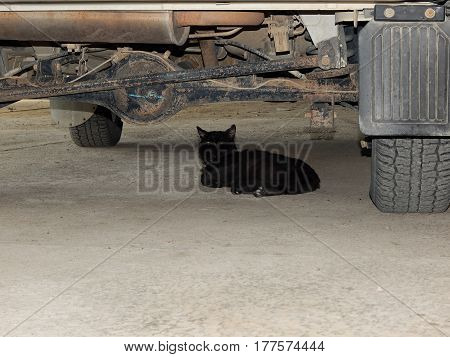 Old black cat lies under the car.