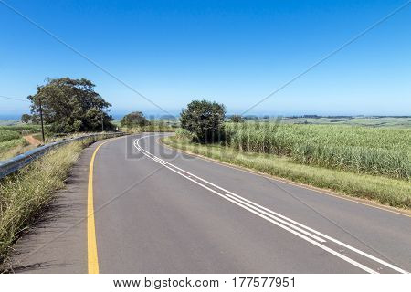 Asphalt Country Road Running Through Sugar Cane Fields
