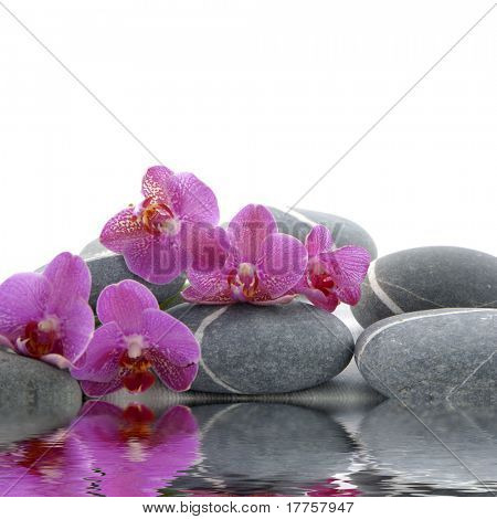 Orchid and pebbles with inverted reflection on white background