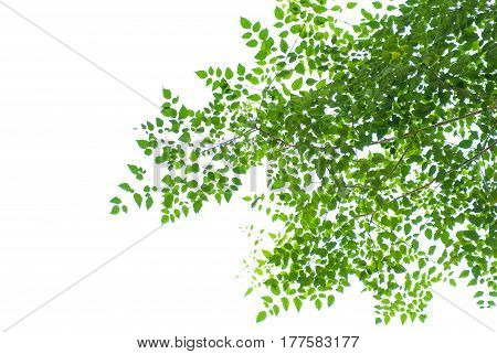 background and texture of green leaf on white background