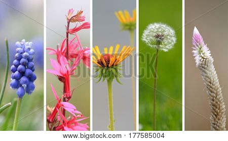 Collage of spring time wild flowers