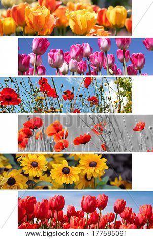 Collage of spring and summer flowers