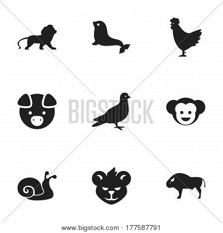 Set Of 9 Editable Nature Icons. Includes Symbols Such As Baboon, Escargot, Sea Calf And More. Can Be Used For Web, Mobile, UI And Infographic Design.