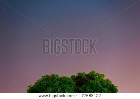 Stars Above Tree with 3 different sky colors