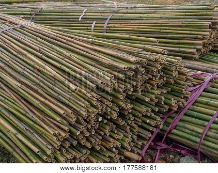 The stems of bamboo trees tied in bundles