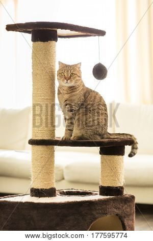 Cat sitting on a scratching post, on a living room background.