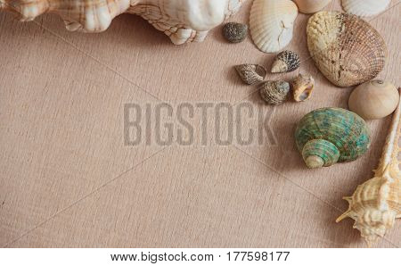Seashells on light wooden background with copyspace