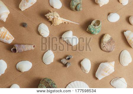many seashells on light background. flat view