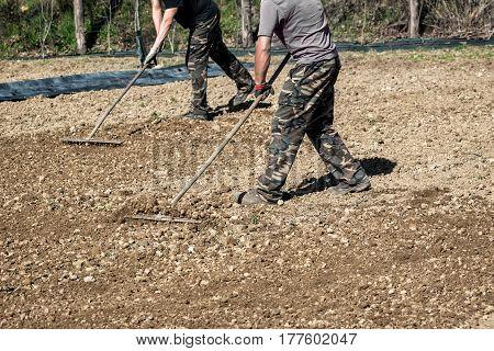 Farmers Raking Freshly Rotovated Or Tilled Soil