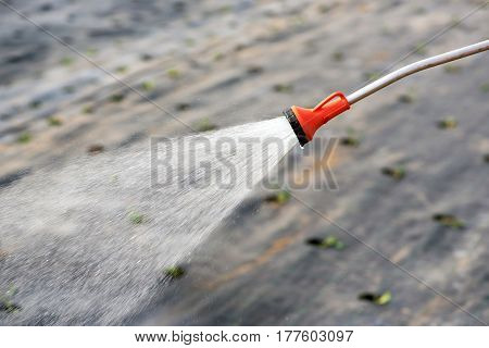 Watering Seedlings With A Fine Spray Of Water