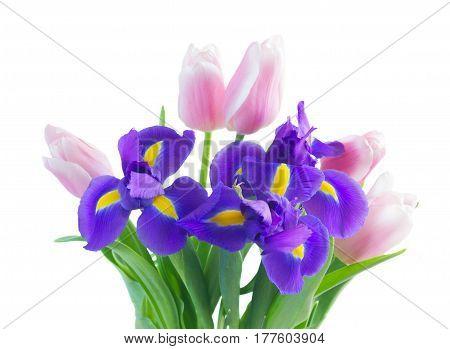 Posy of blue irises and pik tulips close up isolated on white background