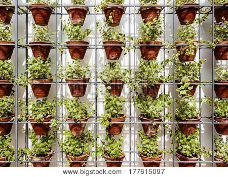 Plants in flower pots on metal rack against white wall