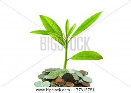 The silver coins with young plant on white background