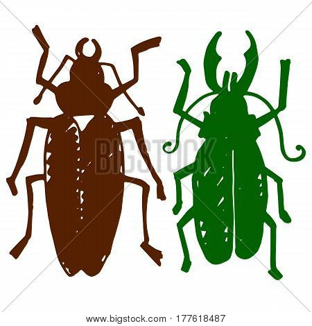 Beetle insect. Nature water beetle and zoology water beetle. Wildlife insect water black beetle ecology detail.