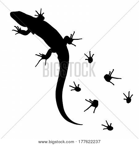 lizard and footprints silhouette on white background, vector