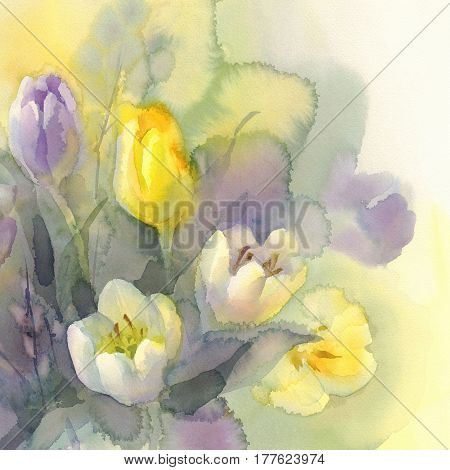 White, yellow and violet tulips watercolor on green background