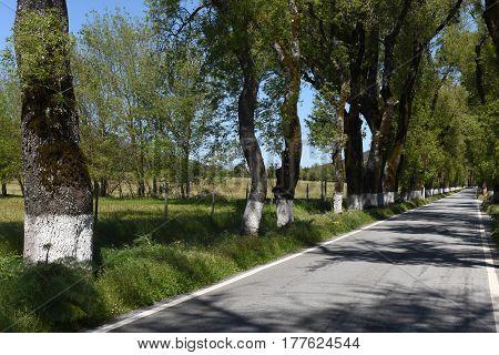 Trees At The Entrance Of The Village Of Castelo De Vide, Alentejo Region, Portugal