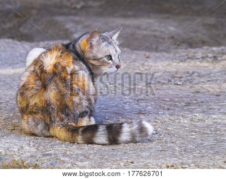 The cute cat lay down on the ground