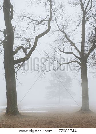 Foggy Moody Scene With Leafless Trees In Fog