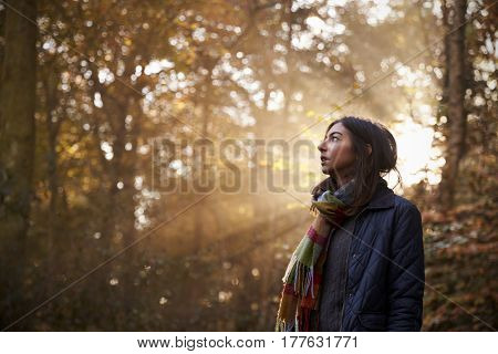 Woman Walks In Autumn Forest With Sun Shining Through Trees