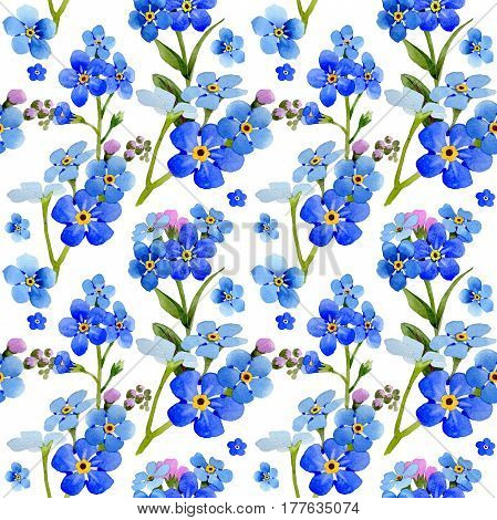 Wildflower myosotis arvensis flower pattern in a watercolor style isolated. Full name of the plant: Myosotis arvensis. Aquarelle wild flower for background, texture, wrapper pattern, frame or border.
