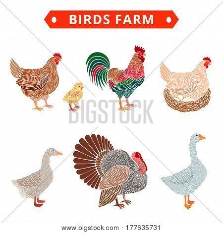 Birds farm. Poultry birds: duck rooster chick goose hen turkey.