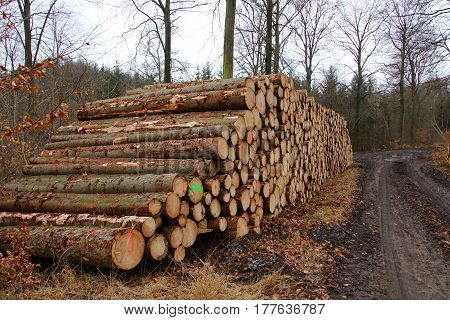 Firewood Stack of freshly felled trees in early March