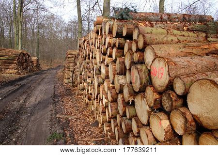 Firewood stacks in the early spring in March