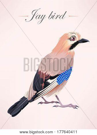 Vector illustration of high detailed eurasian jay bird