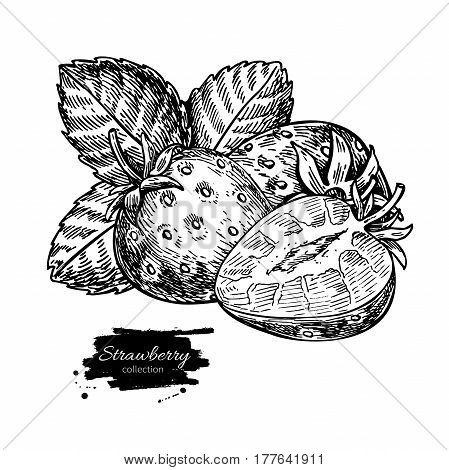 Strawberry vector drawing. Isolated hand drawn berry, slice and leaf on white background.  Summer fruit engraved style illustration. Detailed vegetarian food. Great for label, poster, print