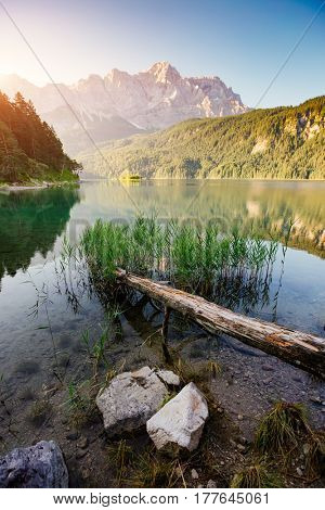 Scenic surroundings near famous lake Eibsee. Wonderful day gorgeous scene. Location resort Garmisch-Partenkirchen, Bavarian alp, sightseeing Europe. Outdoor activity. Discover the world of beauty.