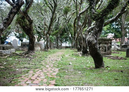Tombstones between trees. Green Cemetery in Malaysia