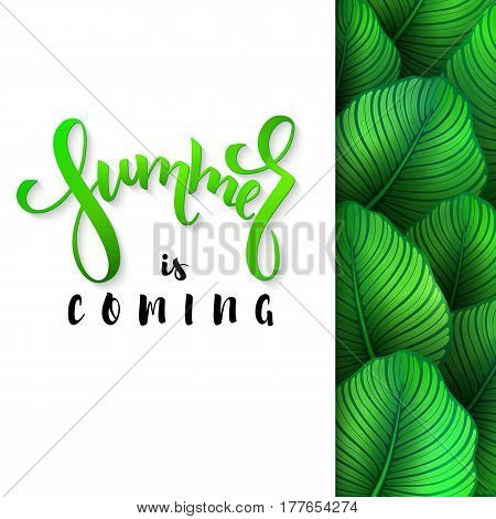 vector illustration of hand lettering poster - summer is coming with paper sheet on a background calathea leaves.