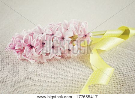 Branch of a pink hyacinth with a yellow ribbon on a cotton fabric background. Empty copy space for text