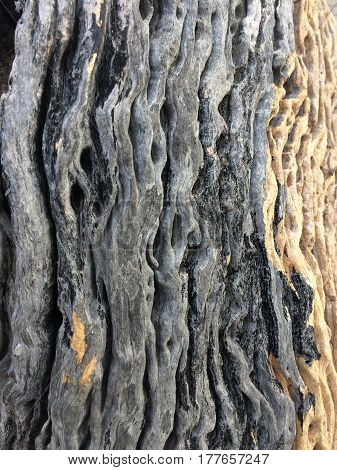 Background and texture of trees wood old