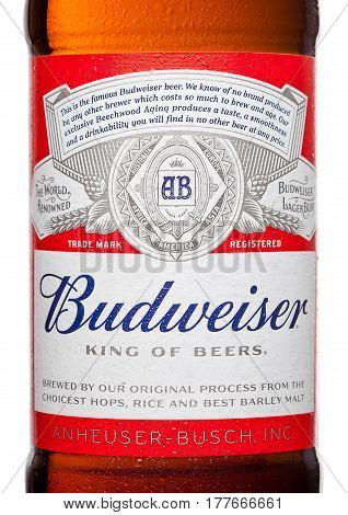 London,uk - March 21, 2017 : Bottle Label Of Budweiser Beer On White Background, An American Lager F