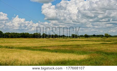 Photo of rice field of bago myanmar landscpae