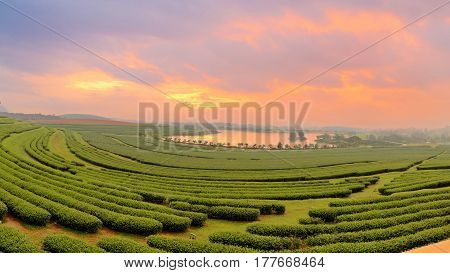 Beautiful landscape of green tea farmland in the morning with dramatic sky