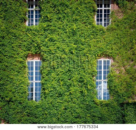 Wall of city hall (stadshuset) building covered by green in Stockholm Sweden Scandinavia Europe