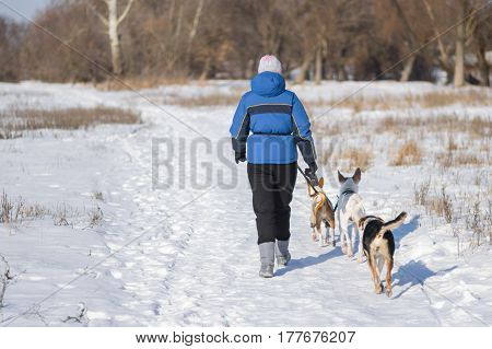 Mature woman with three dogs walking on a snow covered earth road
