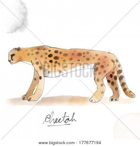 Cheetah. Watercolor animal drawing collection