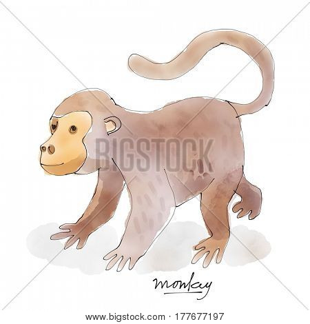 Monkey. Watercolor animal drawing collection