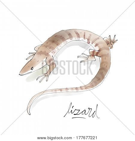 Lizard. Watercolor animal drawing collection