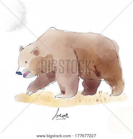Bear. Watercolor animal drawing collection