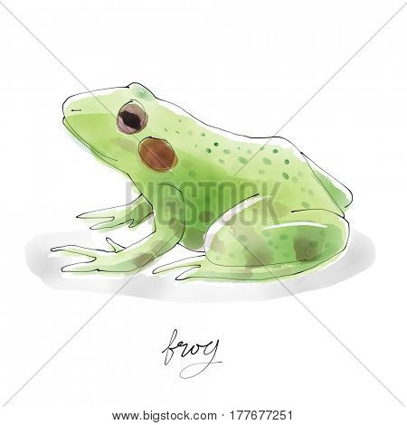 Frog. Watercolor animal drawing collection