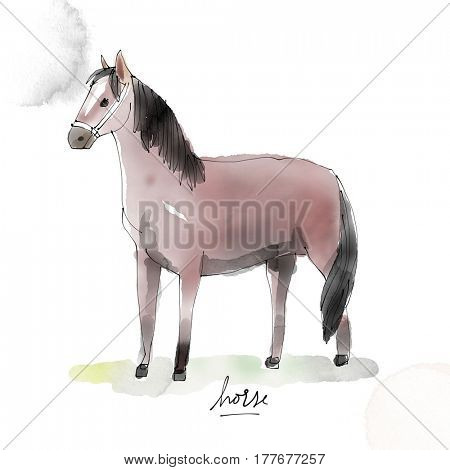 Horse. Watercolor animal drawing collection