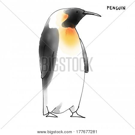 Penguin Watecolor Animal illustration set